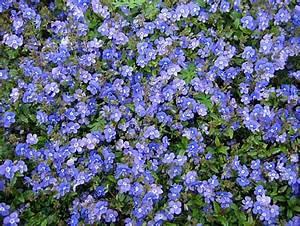 Arbuste Plein Soleil Longue Floraison : mes vivaces inratables feuillage persistant jardin d ~ Premium-room.com Idées de Décoration