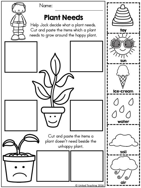 plant activities for kindergarten worksheets for all