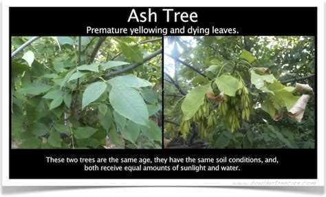 tree problems diagnosis diagnosis and treatment of disease illness and problems with trees