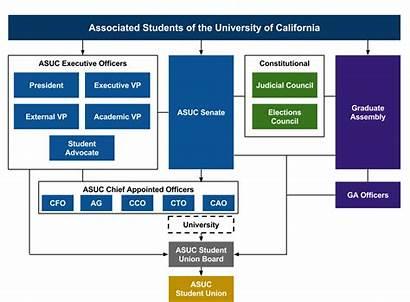 Organizational Chart Non Profit Asuc