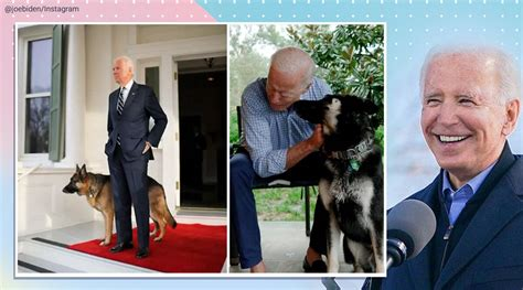 Four years on, Biden to bring 'DOTUS – Dogs of the United ...