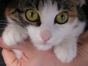 cat antibiotics cat eye antibiotic related keywords suggestions cat