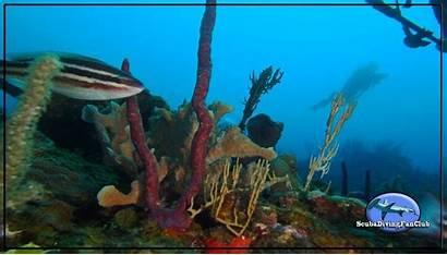 Diving Underwater Scuba