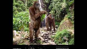 The largest known ape that has ever lived (Gigantopithecus ...
