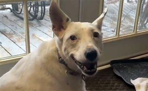 Soctīkla lietotājus saskumdina nedzirdīgs suns, kurš ...
