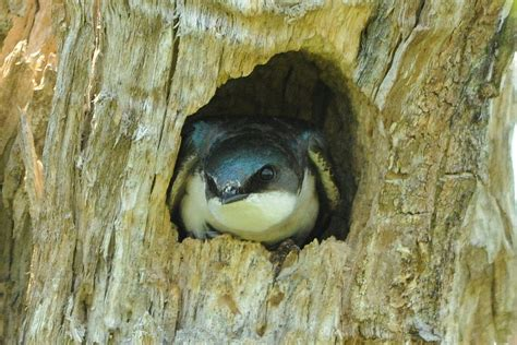 cavity nesting definition bird nests and reproduction