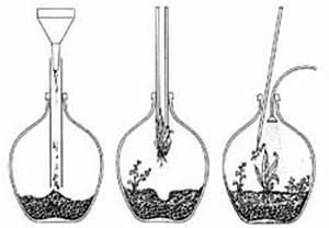 Pflanze In Flasche : aktuelles bio info ~ Whattoseeinmadrid.com Haus und Dekorationen
