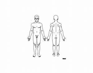 Anterior And Posterior Body Landmarks