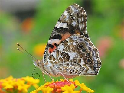 Butterfly Insects Wallpapers Nature Desktop Android Multicolor