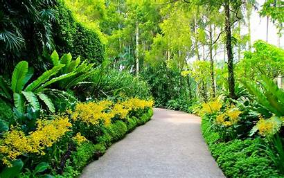 Background Scenery Garden Gardens Singapore Botanic Walking