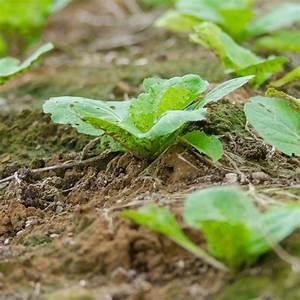 Quel Legume Planter En Septembre : bulbes fruitiers quoi planter en octobre ooreka ~ Melissatoandfro.com Idées de Décoration