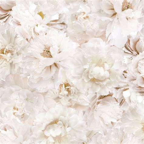 White Flower Background Graham Brown Fresco Floral Wallpaper Floral