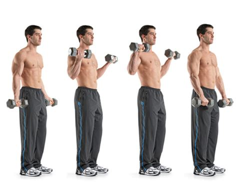 biceps exercises muscle works gym