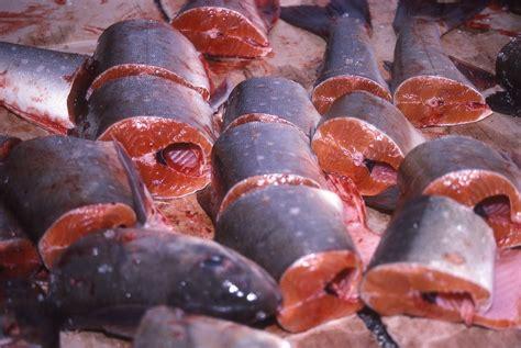 ii inuit food  fishing people   arctic