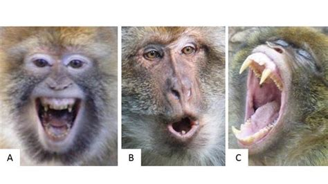 quiz      monkey   bite