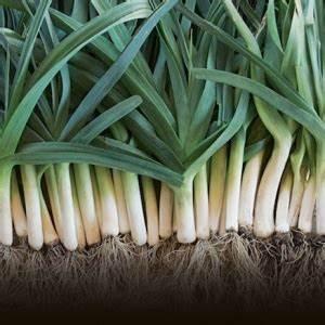 Quel Legume Planter En Septembre : terrarium pour plantes tuto pour le faire et plus de 70 ~ Melissatoandfro.com Idées de Décoration