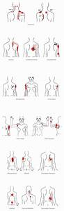 13 Best Anatomy Diagrams Images On Pinterest