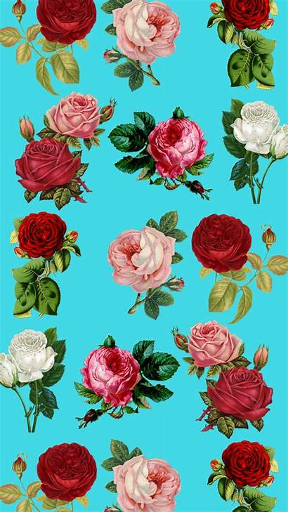 Iphone Floral Wallpapers Pretty Plus Flower Roses