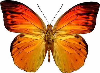 Butterfly Orange Watercolor Jotavmultimedia Butterflies Watercolour Fundo