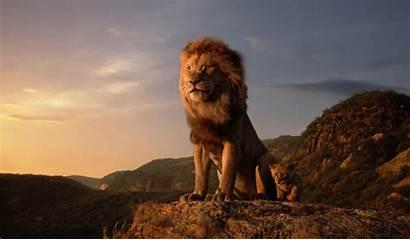 Lion 4k King Wallpapers