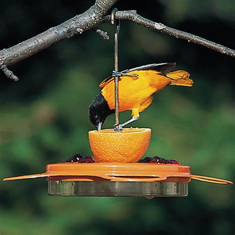 duncraft com birdschoice oriole fest feeder