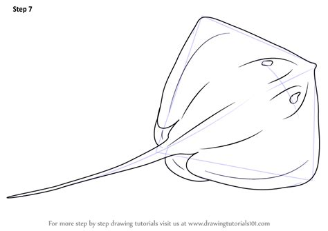 learn   draw  stingray fishes step  step