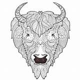 Coloring Bison Printable Head Adult Doodle Drawing Animal Sheets Skull Sue Coccia Aries Illustration Kidspressmagazine Royalty Illustrations Animals Doodles Drawings sketch template