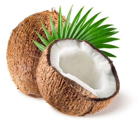 recettes cuisine rapide tout savoir sur la noix de coco