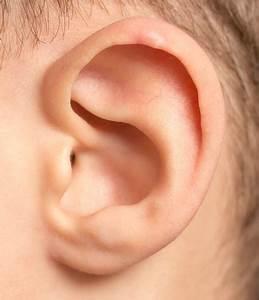 Ear Archives