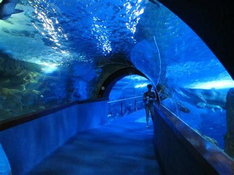 le tunnel picture of aquarium donostia san sebastian san sebastian donostia tripadvisor