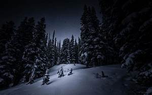 night snow tree forest christmas tree winter HD wallpaper