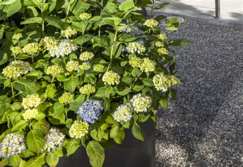 Wo Ist Der Querbeet Garten by Der Blumengarten Querbeet