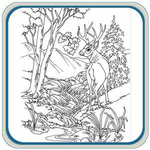 Mule & White Tail Deer Patterns – Classic Carving Patterns