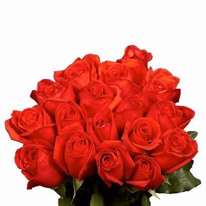Roses Coral Orange Kamila Globalrose Order Stems