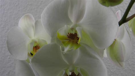 Hängende Deko Ideen by Orchideen Im Glas Deko Ideen Mit Flora Shop