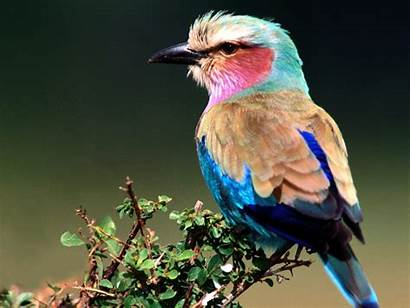 Birds Bird Natural Incredible Wallpapers Flying Awesome