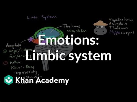 limbic system structure  function emotion video