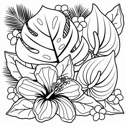 Hibiscus Coloring Tropical Flowers Plants Exotic Illustration