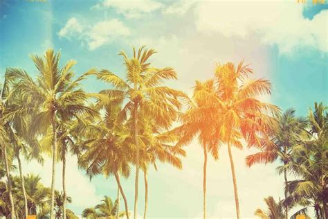 Palm Background Palm Tree Wallpapers And Background Images Stmed Net