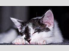 Katzenbilder – Lustige & schöne Katzen Bilder