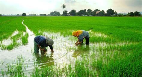 website resmi dinas pertanian kabupaten soppeng