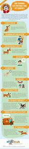 dog training tips infographic pets training your dog With dog training techniques
