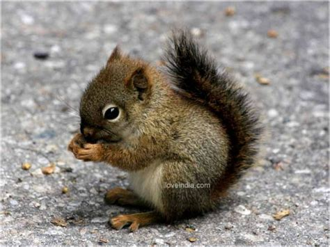 facts about squirrel interesting amazing information