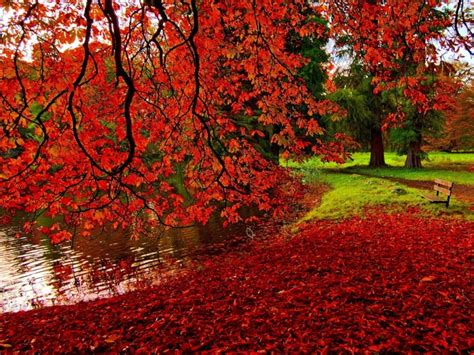 Autumn Season Hd Wallpapers by Autumn Season Wallpapers One Hd Wallpaper Pictures
