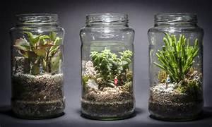 Plantes Pour Jardin Japonais Miniature