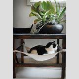 One Legged Cat | 525 x 794 jpeg 54kB