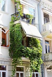 Gemüse Auf Dem Balkon : weinrebe auf dem balkon wertvolle tipps zu anbau pflege ~ Lizthompson.info Haus und Dekorationen