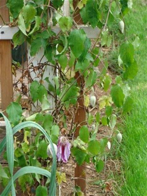 top  gardening ideas    oregon cottage