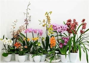 Plante Detoxifiante : soins des plantes vertes fleuriste bulldo ~ Melissatoandfro.com Idées de Décoration