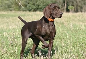 German Dog Breeds - Dog Breeders Guide